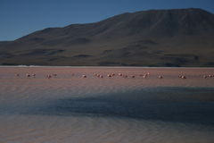 Rosafarbener See mit Flamingo in den Anden Stockfotos