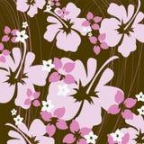 Rosafarbener und brauner Hibiscus Stockbild