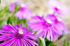 Rosafarbener Wildflower Stockbilder