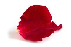 rosafarbenes Blumenblatt Lizenzfreie Stockfotografie