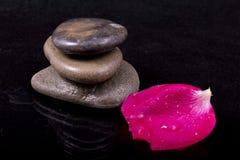 Rosafarbenes Blumenblatt der nassen Steine mit Wassertropfen auf Schwarzem Stockfoto