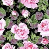 Rosafarbenes Blumenmuster des Wildflowertees in einer Aquarellart Stockfoto