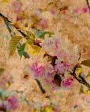 Rosafarbenes Blumenpergament Stockfotografie