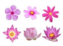 Rosafarbenes Blumenset Lizenzfreies Stockbild