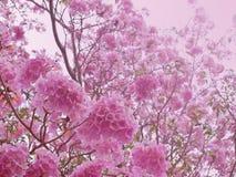 Rosafarbenes Gefühl des süßen Traums Stockfotos