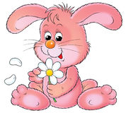 Rosafarbenes Kaninchen Stockbilder