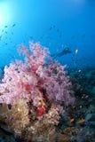 Rosafarbenes weiches Korallen- und Unterwasseratemgerättaucherschattenbild. Stockfoto
