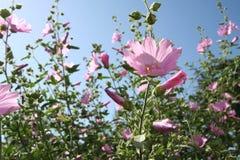Rosafarbenes Zen Stockbilder
