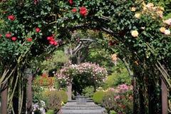 Rosaleda en los jardines botánicos Imagen de archivo libre de regalías