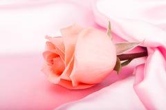 Rosarose Lizenzfreie Stockbilder