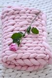 Rosarose auf der rosa Decke Lizenzfreie Stockfotos