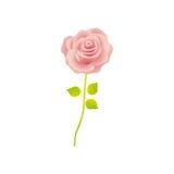 Rosarose mit Stamm- und Blattblumenmuster vektor abbildung