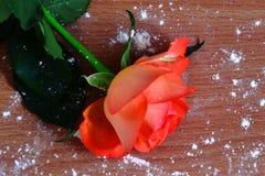 Rosarose auf dem hölzernen Hintergrund lizenzfreies stockbild
