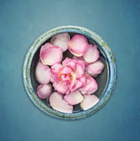Rosarosenblume mit dem Blumenblatt in der blauen Schüssel mit Wasser auf blauem Hintergrund Lizenzfreies Stockbild
