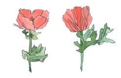 Rosarote Mohnblumenblume des Aquarells mit Blättern Stockfotografie