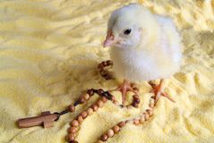 Rosary. Chick with beads of flour food Stock Images