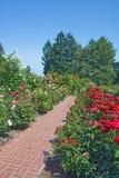 Rosas, árboles de hoja perenne y vertical del camino del ladrillo rojo Imágenes de archivo libres de regalías