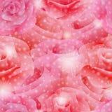 rosas Fotografia de Stock Royalty Free