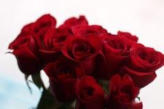 Rosas 4 Fotografía de archivo libre de regalías