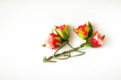 Rosas, Foto de Stock