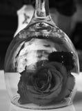 rosas Imagem de Stock Royalty Free