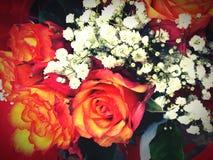 rosas foto de archivo libre de regalías
