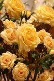 Rosas Imagen de archivo libre de regalías