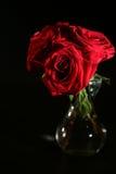 rosas Fotos de archivo libres de regalías