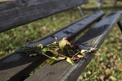 Rosas abandonadas en un banco en el parque Imágenes de archivo libres de regalías