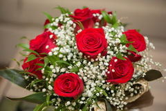 Rosas agradáveis fotos de stock