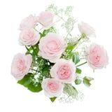 Rosas aisladas en blanco Fotos de archivo libres de regalías