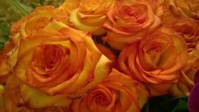 rosas alaranjadas Imagem de Stock Royalty Free