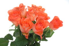 Rosas alaranjadas (com gotas da água) Fotos de Stock Royalty Free