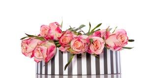 Rosas alaranjadas cor-de-rosa Imagens de Stock Royalty Free