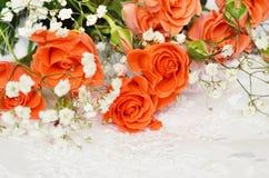 Rosas alaranjadas no branco foto de stock