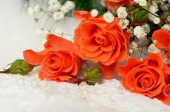 Rosas alaranjadas no branco fotografia de stock