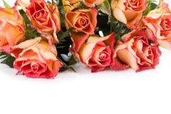 Rosas alaranjadas sobre o branco Fotografia de Stock