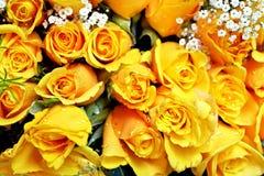 Rosas amarelas Fotografia de Stock