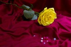 Rosas amarelas imagem de stock royalty free