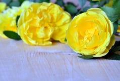 Rosas amarelas Fotografia de Stock Royalty Free