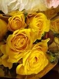 Rosas amarelas Foto de Stock