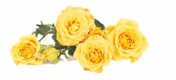 Rosas amarelas. fotos de stock royalty free