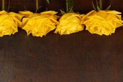 Rosas amarelas bonitas em um fundo escuro Foto de Stock Royalty Free