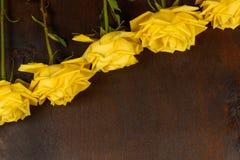 Rosas amarelas bonitas em um fundo escuro Fotografia de Stock Royalty Free