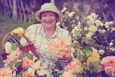 Rosas amarelas da mulher do aposentado foto de stock