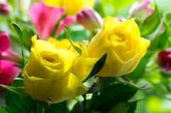Rosas amarelas macias Fotos de Stock Royalty Free