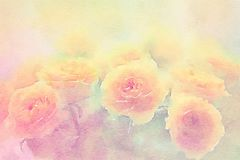 Rosas amarelas no fundo da aquarela ilustração royalty free