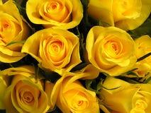 Rosas amarillas fotografía de archivo