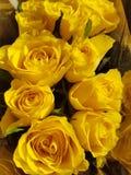 Rosas amarillas Imagen de archivo libre de regalías