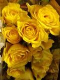 Rosas amarillas Foto de archivo